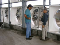 Cow Cooling Dairy Fans